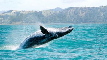 Observation Baleines Scandinavie