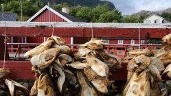 Les Plats Et Specialites Typiques A Deguster En Norvege
